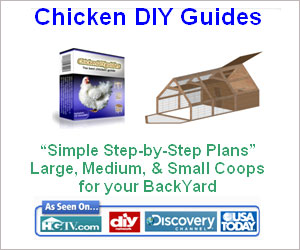 Chicken Coop Guide