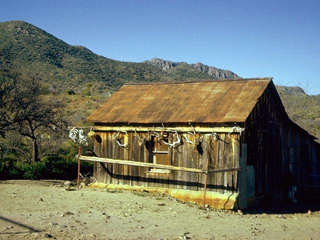 tips to homesteading what are the realities of