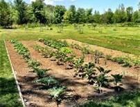 004 garden
