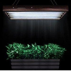 easy hydroponics system